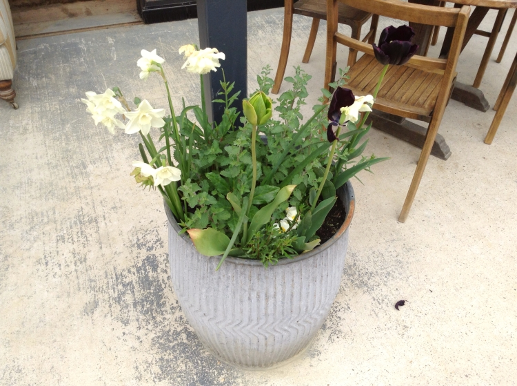 soho farmhouse tin planters