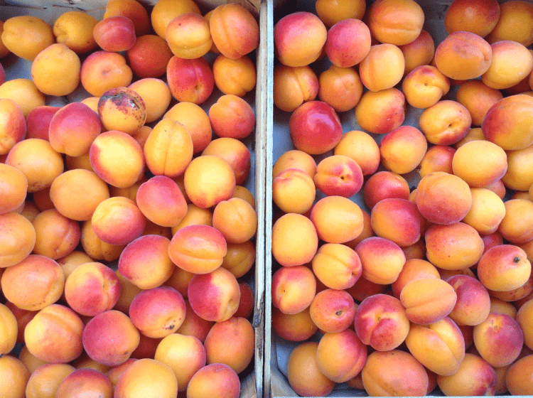 As fresh as it gets - Apricots in Sault market