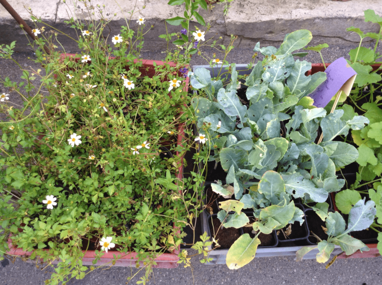 All kinds of green - plants for sale in Sault market