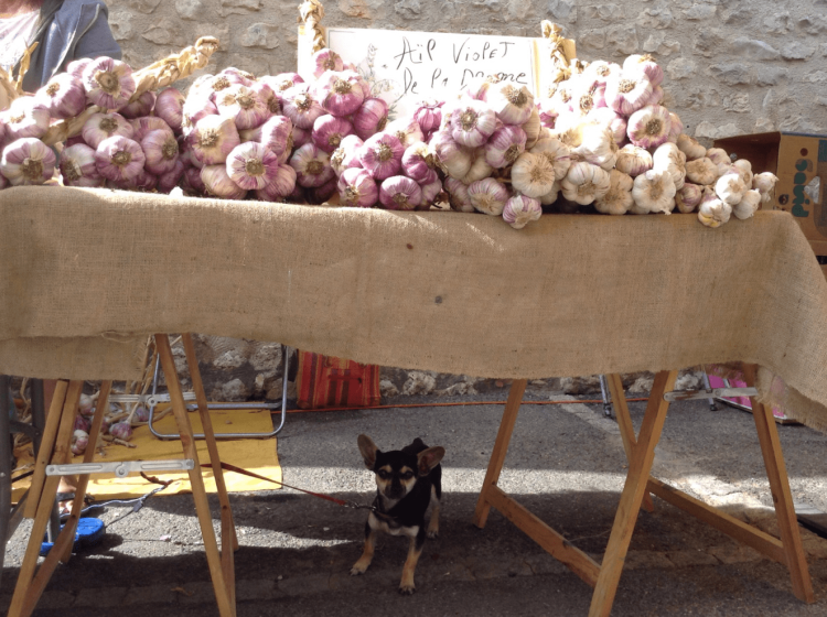 Heavy laden Garlic table and a furry friend