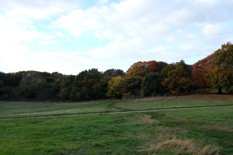 Flattened grass, Hampstead Heath